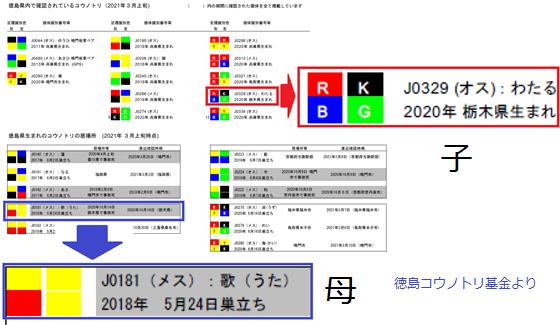 徳島コウノトリ.png